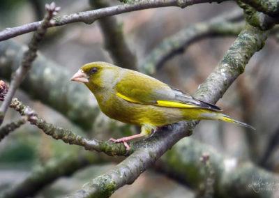 ptaki3